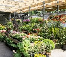 Ashfield Garden Centre