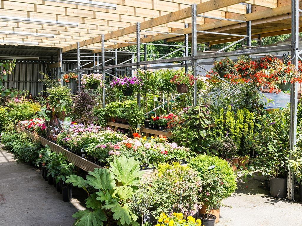 Personable Garden Centre  Hitchcock And King With Fair  Hitchcock  King Garden Centre Ashfield  With Alluring William Booth Garden Apartments Also Parking Kew Gardens In Addition Raised Vegetable Garden Beds And Wheatcrofts Garden Centre As Well As Garden Answers Additionally Syon Garden Centre From Hitchcockandkingcouk With   Fair Garden Centre  Hitchcock And King With Alluring  Hitchcock  King Garden Centre Ashfield  And Personable William Booth Garden Apartments Also Parking Kew Gardens In Addition Raised Vegetable Garden Beds From Hitchcockandkingcouk