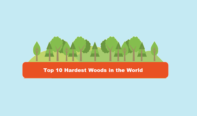 Top 10 Hardest Woods In The World Hitchcock Amp King